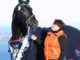 Earl - dagens beste hest under kåringen på Starum