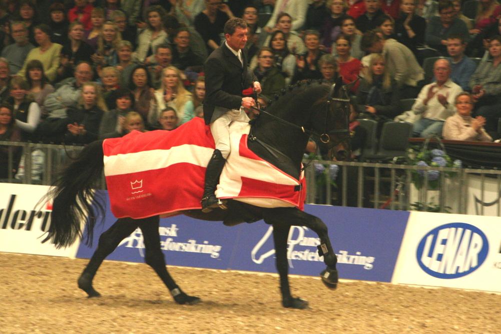 Årets Hingst 2009 i Dansk Varmblod ble Cajus (Coronado/Lagano). Foto: Eva Kindahl.