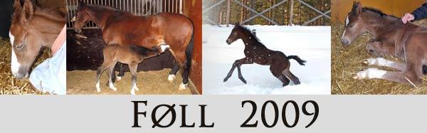 foll2009