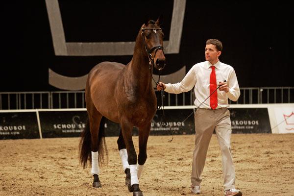 Hans Jørgen Hoeck mønstret 20 hester i Herning i år. Han har passert 100 visede hingster i Herning siden starten i 1998.
