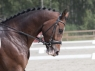 schufro-dreamIMG_3265