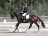schufro-dreamIMG_3266