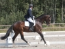 schufro-dreamIMG_3291