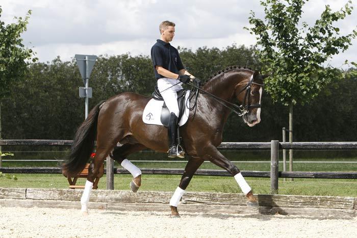 To fem år gamle hester etter Blue Hors Don Romantic kvalifiserte seg i helgen. (Foto: Dansk Varmblod)