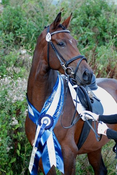 Piri Piri e. Blue Hors Don Romantic/Davignon er oppdrettet av Cecilie Kilde.