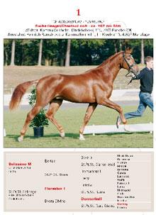 Den svenske hestehandleren Johan Ifverson kjøpte katalognummer 1 e. Belissimo M. (Faksimile: www.oldenburger-pferde.com)