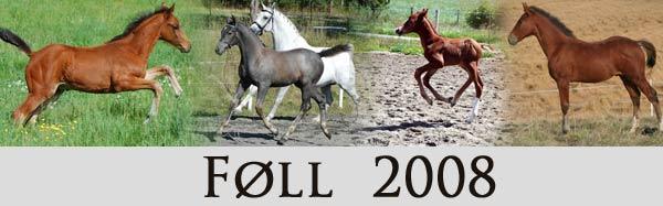 foll2008