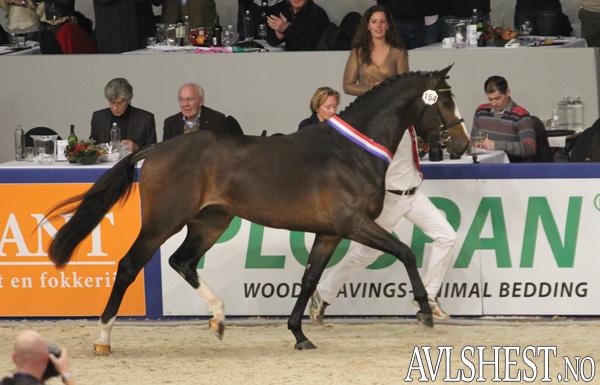 KWPN Champion 2012: Freeman VDL (e. Emmerton/Nimmerdor).